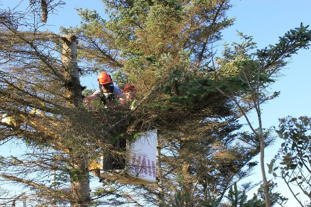 Tree Inspections