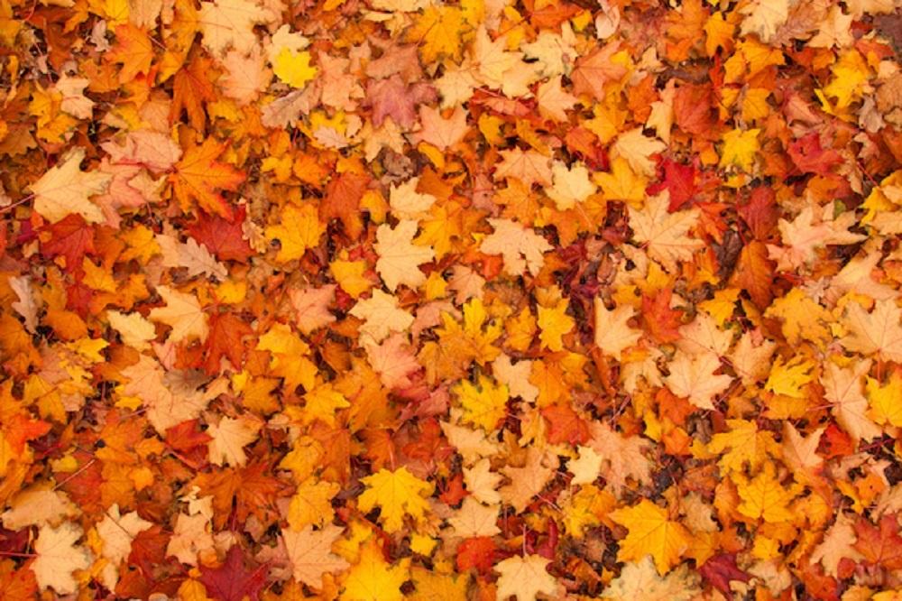 Rake Up Fallen Leaves